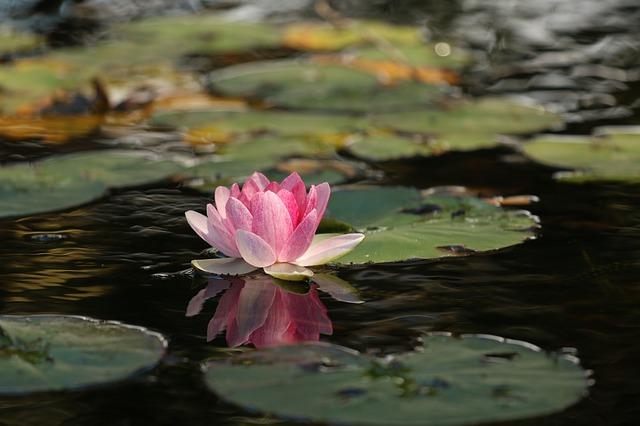 Beauty in peace